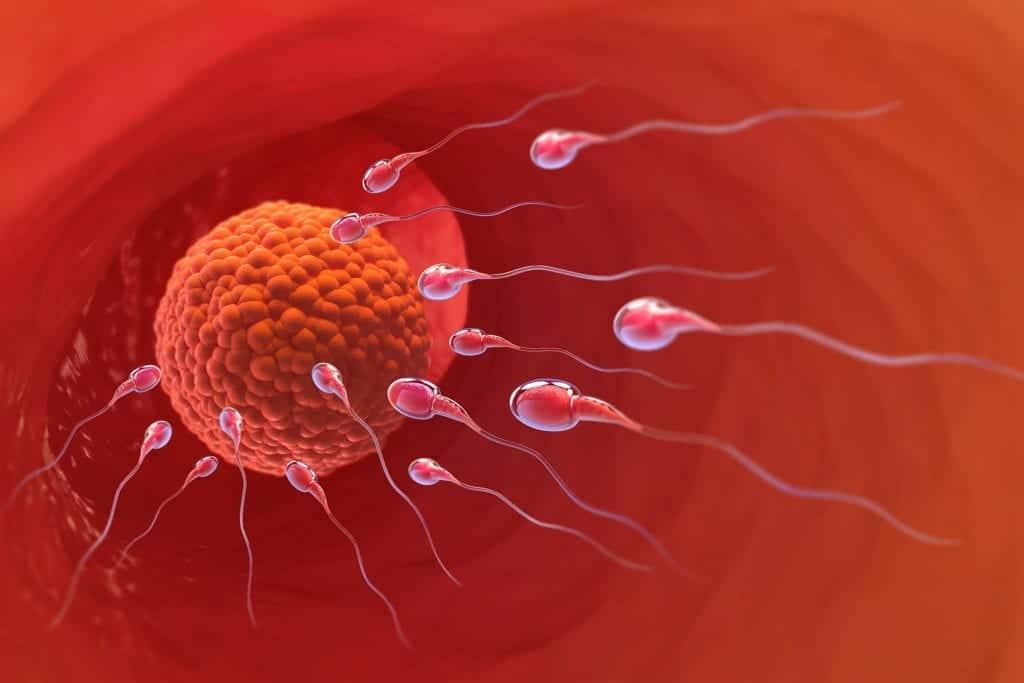 Espermatozóides encontram o óvulo em uma simulação 3D de Inseminação intrauterina.