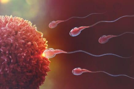 Espermatozóides vão de encontro ao óvulo em uma simulação 3D de Inseminação intrauterina.